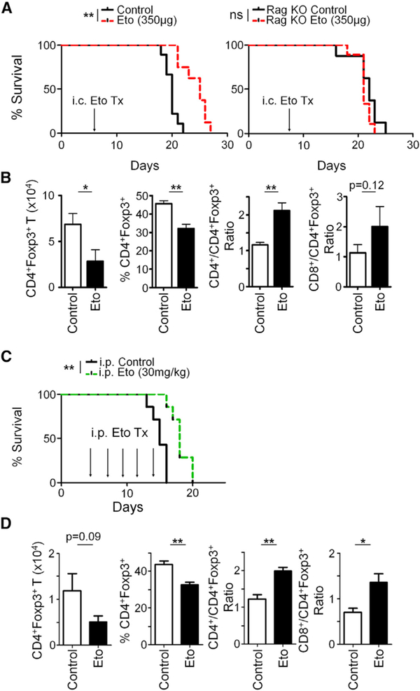 In Vivo Treatment of Eto Causes a Survival Benefit in Immunocompetent Mice (A) Survival of WT or immunodeficient Rag 0/0 mice implanted with 4 × 10 5 GL-261 and treated with intracranial Eto administration beginning at day 7 after tumor implantation. (B) Quantification of Tregs and their ratios to other T cell subsets 48 hr after Eto treatment (day 9). (C) Survival of mice injected i.p. with 30 mg/kg Eto. (D) Flow-cytometric analysis of Treg infiltration and their ratios to other T cell subsets 48 h after second Eto treatment (9 days). Survival curves are from at least 7 mice per group from two independent experiments; statistical significance was calculated using log-rank analysis. Flow cytometry statistics were calculated and are indicated as percent positive population ± SEM; n = 5 per group, representative of two independent experiments in (B) and one experiment in (D). Unpaired t test analysis was used to calculate significance. *p