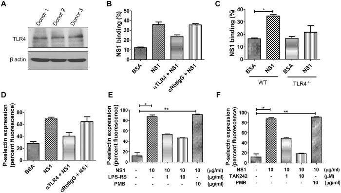 DENV NS1 binds to platelets and induces activation through <t>TLR4</t> signal transduction. (A) The protein expression levels of TLR4 and β actin, an internal control, in human-isolated platelets from 3 different donors were detected using Western blotting (50 μg protein/lane). (B) Human-isolated platelets were preincubated with αTLR4 or a control Rabbit IgG for 1 h, and the binding of NS1 on platelet surfaces was determined by flow cytometry using FITC-conjugated anti-NS1 monoclonal antibodies (33D2-FITC) (n = 3). (C) The binding of NS1 on platelets isolated from wild-type or TLR4 knockout mice was determined by flow cytometry (n = 4). Platelets were preincubated with or without different concentrations of (D) αTLR4 (E) the TLR4 antagonist LPS-Rs, (F) the TLR4 signaling inhibitor TAK242, or the LPS inhibitor polymyxin B (10 μg/ml) for 30 min, followed by BSA or NS1 (10 μg/ml) stimulation for 1 h (n = 4). The percent fluorescence of NS1 binding and the P-selectin surface expression on platelets were analyzed by FACSCalibur flow cytometry. *P