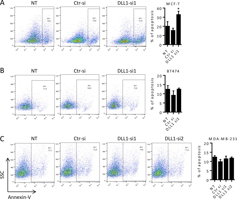 DLL1 downregulation promotes apoptosis of MCF-7 cells. (A-C) MCF-7, BT474 and MDA-MB-231 cells were not-transfected (NT) or transfected with DLL1-siRNAs (DLL1-si1/2), or negative control (Ctr) siRNA. At 92 hours (MCF-7) and 120 hours (BT474 and MDA-MB-231) after transfection cells were collected, stained with annexin-V and apoptosis analyzed by flow cytometry. Representative dot plots showing the percentage of apoptosis at each condition are represented. Graph shows percentage of apoptosis (mean + SD) of at least three independent assays, each one performed in triplicate. *, P