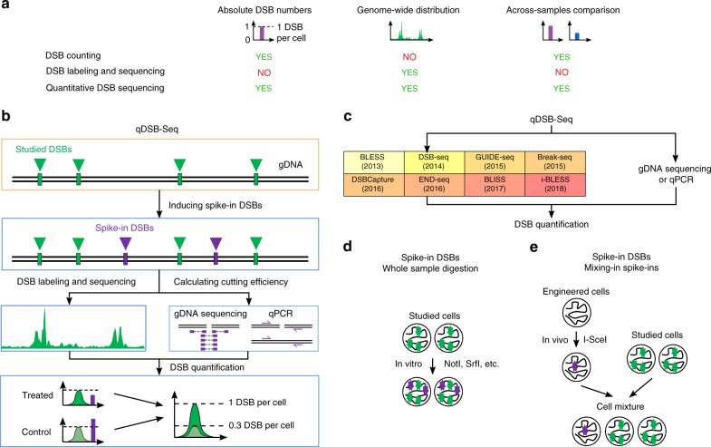 Quantitative DSB sequencing (qDSB-Seq) method. a A comparison of current DNA double-strand break (DSB) counting (e.g., immunofluorescence microscopy, quantitative PCR (qPCR)) and DSB sequencing strategies (e.g., BLESS 3 , i-BLESS 15 , END-Seq 6 , Break-Seq 4 , DSBCapture 5 ) with our qDSB-Seq method. b In qDSB-Seq protocol after DSB induction cells are treated with a restriction enzyme to introduce site-specific, infrequent DSBs (spike-ins). Next, DSBs are labeled (here using i-BLESS 15 or BLESS 3 ) and sequenced. Simultaneously, genomic DNA (gDNA) sequencing (or qPCR) is performed and used to estimate the cutting efficiency of the enzyme, and thus frequency of induced spike-in DSBs, which is then used to quantify the absolute DSB frequencies (per cell) of studied DSBs in the sample (Methods). c qDSB-Seq can be combined with any sequencing-based DSB labeling method. d , e Spike-in DSBs were induced in two different ways: d the studied cells were digested using the NotI, SrfI, AsiSI, or BamHI restriction enzyme in vitro; e cells expressing a restriction enzyme in vivo were mixed with the studied cells (I-SceI digestion) or alternatively a restriction enzyme was expressed in vivo in all studied cells (DIvA cells discussed below)
