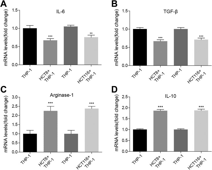Colon cancer cells promote M2 polarization of human myeloid leukemia mononuclear cells (THP-1) cell. A, Enzyme-linked immunosorbent assay <t>(ELISA)</t> assay showing the protein level of M1 macrophage-associated marker interleukin <t>(IL)-6</t> in THP-1 alone or cocultured with colon cancer cell lines HCT8 or HCT116. The mean (SD) in the graph presents the relative levels from 3 replications. ** P