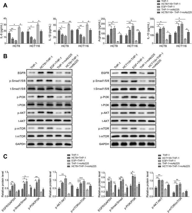 Colon cancer cells promote M2 polarization of macrophage via epidermal growth factor (EGF)/epidermal growth factor receptor (EGFR) signaling. A, Enzyme-linked immunosorbent assay (ELISA) assay showing the protein level of M2 macrophage-associated marker interleukin (IL)-6, IL-1β, Arginase-1, IL-10 in THP-1 alone, THP-1 cocultured with HCT8 or HCT116, THP-1 treated with EGF, THP-1 treated with mAb225, and THP-1 cocultured with HCT8 or HCT116 treated with mAb225. The mean (SD) in the graph presents the relative levels from 3 replications. * P