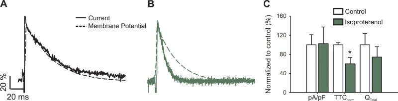 L-type calcium current during an AP upon β-adrenergic stimulus. (A and B) Representative nifedipine-sensitive current (solid line) elicited by the AP (dashed line) prerecorded from the same cell in control (A) and isoproterenol-treated (B) newborn rat cardiomyocytes. (C) Bar graph of maximal current normalized by cell capacitance (pA/pF); total time of nifedipine-sensitive current normalized by its APD (TTC norm ); and the total current integral normalized by cell capacitance (Q total ). Data are presented as percentages with respect to the controls. The bar graph shows mean ± SEM; empty bars represent control cardiomyocytes and green bars correspond to isoproterenol-treated cardiomyocytes ( n = 6; *P