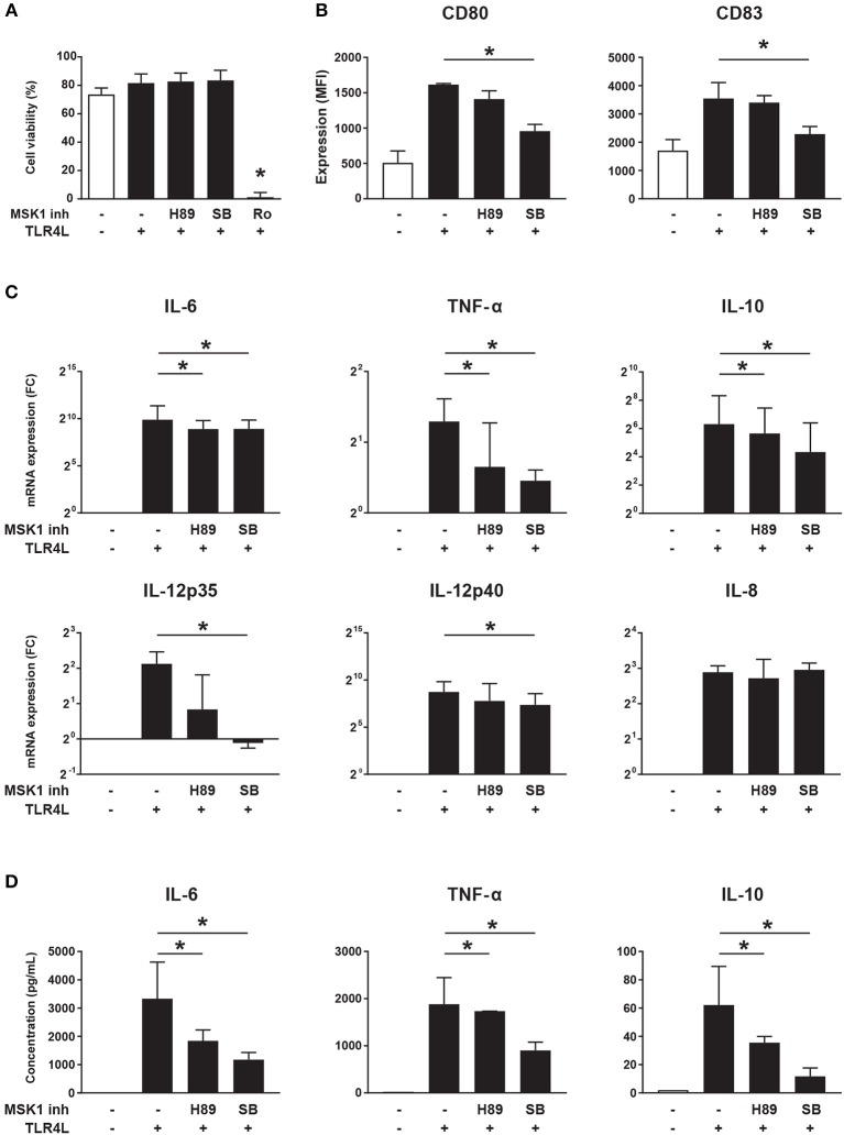 MSK1 inhibition reduces cDC2 activation and inhibits the production of pro-inflammatory cytokines. Isolated cDC2s from buffy coats were treated with H89 (10 μM), SB 747651A (SB; 10 μM), Ro 31-8220 (Ro; 5 μM), or left untreated for 1 h. Then, except for medium control, cells were stimulated with TLR4L (100 ng/mL) for 6 h. FACS was used to assess cell-viability (A) and the expression of CD80 and CD83 shown as median fluorescence intensity (MFI) (B) . Cytokine production upon TLR4L stimulation in the presence or absence of MSK1 inhibitors was measured by qRT-PCR (C) and ELISA (D) . Results are represented as median ± IQR. * p