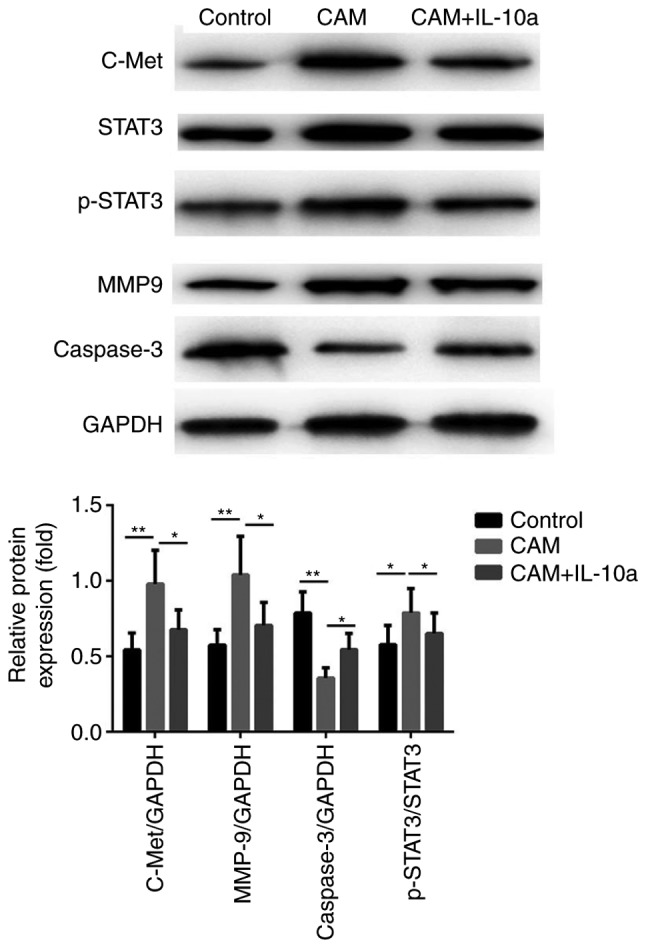 Protein expression levels of c-Met/STAT3 signaling proteins in different treatment groups. Western blot analysis was used to confirm the effects of IL-10 on proteins associated with the c-Met/STAT3 pathway. *P