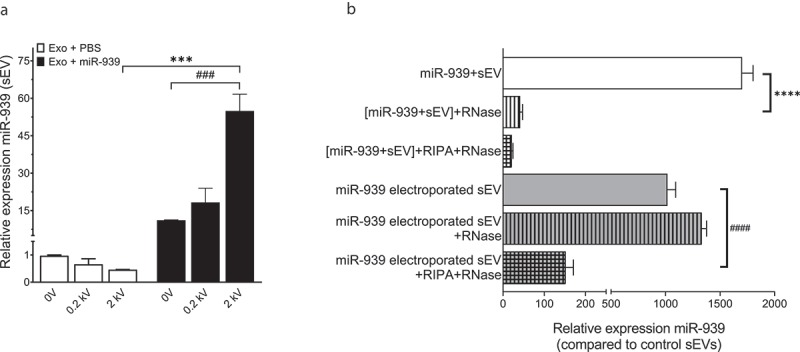 Electroporation efficiently packages miRNA within THP-1 cell-derived sEVs. (a). Ten micrograms of THP-1 cell-derived sEVs were electroporated with 30 picomoles of miR-939 at different voltages and the amount of miR-939 incorporated within sEVs was estimated by Taqman-based qRT-PCR. (b). The sEVs subjected to passive incubation or 2 kV electroporation with miR-939 were subsequently treated with a combination of RNase A and detergents to evaluate the surface versus internal incorporation of miRNA. miR-939 within electroporated sEVs were resistant to RNase A digestion, while miR-939 incubated passively with sEVs were significantly degraded. Taqman-based qRT-PCR was used to determine the miR-939 content (normalized to miR-223) and significance was determined by one-way ANOVA with Sidak's multiple comparison test ***, ### p