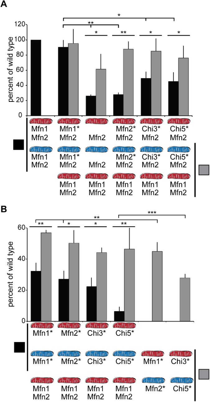 Fusion activity of Chi proteins in heterotypic and homotypic complexes as assessed in vitro. (A) Mitochondria were isolated from wild-type cells (Mfn1, Mfn2) or clonal populations of Mfn1-null cells transduced with empty vector (Mfn2) or expressing either Mfn1-FLAG (Mfn1*Mfn2), Mfn2-FLAG (Mfn2*Mfn2), Chi3-FLAG (Chi3*Mfn2), or Chi5-FLAG (Chi5*Mfn2), where the asterisk indicates the nonendogenous protein. The indicated mitochondrial combinations were subject to in vitro fusion conditions at 37°C for 60 min and data are expressed as a relative amount of wild-type controls, performed in parallel. Black bars indicate homotypic reactions, where both mitochondrial fusion partners possess the same mitofusin proteins. Gray bars indicate heterotypic fusion reactions, where one of the mitochondrial fusion partners is wild type. Error bars indicate mean + SD from at least four independent experiments and the statistical significance indicated on the graphs was deter­mined by paired t test analysis (one tail); *, P