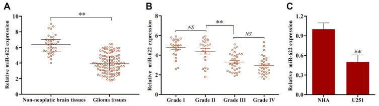 The relative level of microRNA-622 (miR-622) in 108 glioma tissues and 36 non-neoplastic brain tissues, glioma cell line (U251) and normal human astrocyte (NHA) was tested by qRT-PCR analysis. ( A ) The expression level of miR-622 was found to be remarkably decreased in glioma tissues compared to non-neoplastic brain tissues. ( B ) We also found that miR-622 expression level showed a distinctly downward tendency along with the increasing malignancy degree of glioma. Besides, miR-622 expression was much lower in grades III–IV than that in grades I–II. ( C ) Furthermore, the expression level of miR-622 in U251 cells was distinctly decreased compared to that in NHA. ** p