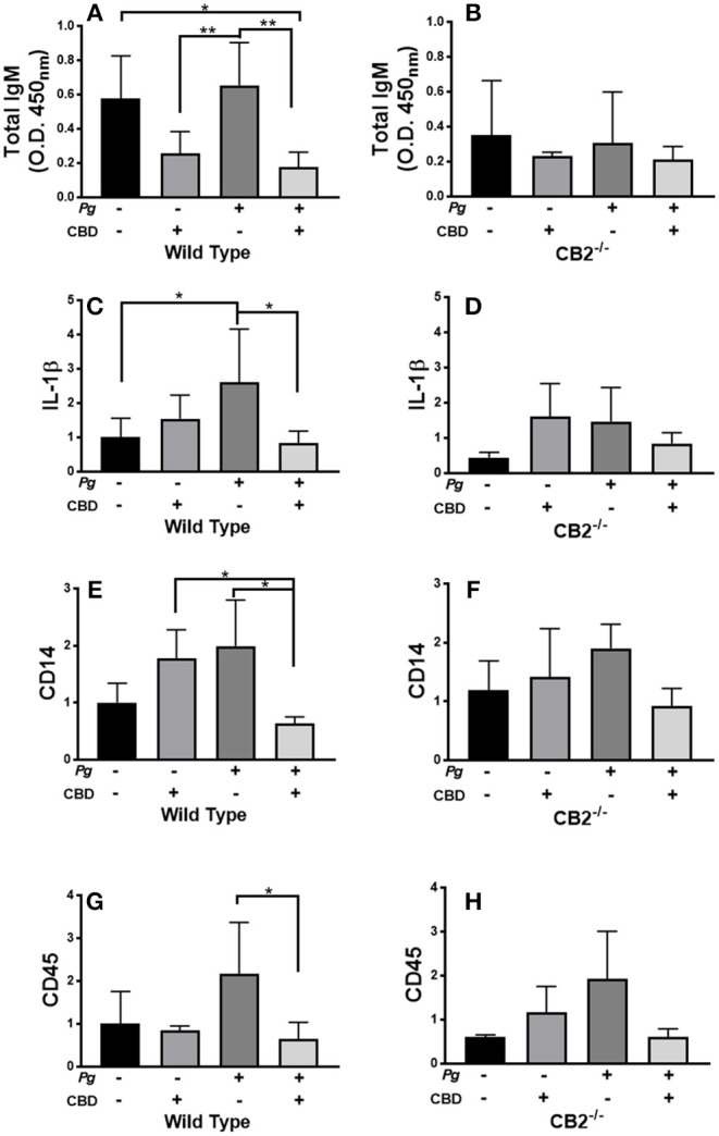 CBD suppresses inflammation induced by repeated oral inoculation with P. gingivalis . CB2 −/− and control groups of C57Bl6 mice ( n = 5 per group) were treated with cannabidiol or vehicle control and repeatedly orally infected with P. gingivalis 33277 or carboxymethyl cellulose control. Total serum IgM was measured by ELISA (A,B) ; and gingival tissue transcripts of inflammation-related biomarkers were detected by qPCR (C–H) . There were no differences in the total IgG or P. gingivalis -cognizant IgM or IgG titers of WT vs. CB2 −/− animals ( data not shown ). Total IgM, IL-1β, CD14, and CD45 signals differed in WT mice treated with P. gingivalis only compared to those dually treated with bacteria and CBD in WT animals only, all p