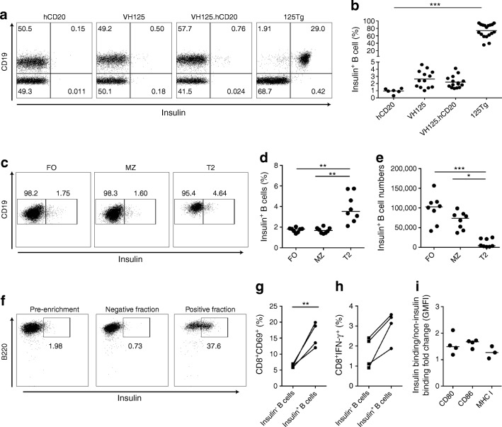 Anti-insulin B cells successfully present antigen to insulin-specific CD8 T cells. ( a , b ) Anti-insulin B cells from spleens of hCD20/NOD (hCD20), VH125, VH125.hCD20/NOD (VH125.hCD20) and 125Tg mice analysed by flow cytometry using human insulin conjugated to FITC fluorochrome. Representative flow cytometric plots ( a ) and quantification of total frequency of insulin-positive B cells ( b ) in each transgenic strain are shown. n = 6 (hCD20/NOD); n = 13 (VH125); n = 15 (VH125.hCD20/NOD); n = 18 (125Tg). Cells were gated on live CD3 − CD19 + cells. ( c – e ) VH125.hCD20/NOD splenic B cells were labelled for compartments (follicular zone [CD23 hi CD21 lo ], marginal zone [CD23 lo CD21 hi ], transitional 2 cells [CD23 hi CD21 hi ]) and counterstained with insulin–FITC ( n = 8 mice). Representative flow cytometric plots of insulin + B cells in each compartment ( c ), quantification of the percentage of B cells ( d ) and quantification of absolute insulin + B cell numbers ( e ) are shown. ( f – i ) Anti-insulin B cells from spleens of groups ( n = 3–5 pooled) of VH125.hCD20/NOD mice were enriched using insulin–FITC labelling and FITC microbeads and stimulated with 5 mg/ml anti-CD40 for 24 h before co-culture with purified G9 Cα −/− insulin-specific CD8 T cells. CD8 T cells were then analysed for activation markers after 24 h. Positive insulin fractions after enrichment ranged from 25% to 45% ( n = 4 groups). Representative plots showing enrichment of insulin-binding B cells by anti-FITC microbeads, labelled with B220 (as B220-based enrichment) and insulin ( f ) and the percentage of CD69 ( g ) and IFN-γ ( h ) expression on live CD8 T cells after culture with insulin-positive and -negative fractions are shown. ( i ) Fold change in GMFI of co-stimulation markers CD80 and CD86 and MHC I on insulin-positive and -negative B cells (live CD19 + ) after co-culture. All data shown are representative of at least three independent experiments. Horizontal lines represent median val