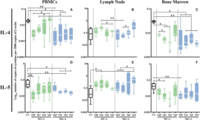 Anti-inflammatory cytokine gene expression in dogs treated with either MT+A or MG+A protocol along all time-points. IL-4 (A–C) and IL-5 (D–F) mRNA in PBMC (A,D) , lymph node (B,E) , and bone marrow (C,F) cells of dogs from MT+A, MG+A, and Control Group (CG) was evaluated by qPCR. Results of 17 dogs and three replicates per sample are represented by box and whisker plot, median, minimum, and maximum values. The non-parametric Kruskal-Wallis Test (one-way ANOVA on ranks) with Dunn's post hoc test was used for statistical comparisons between treatments groups and the CG. The Repeated Measures ANOVA Test with Tukey's post hoc test was used for statistical comparisons inside each treatment group. * p