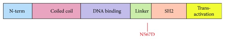 Schematic diagram of <t>STAT3</t> protein structure showing the position of the N567D mutation identified from a patient with Hyper IgE syndrome.