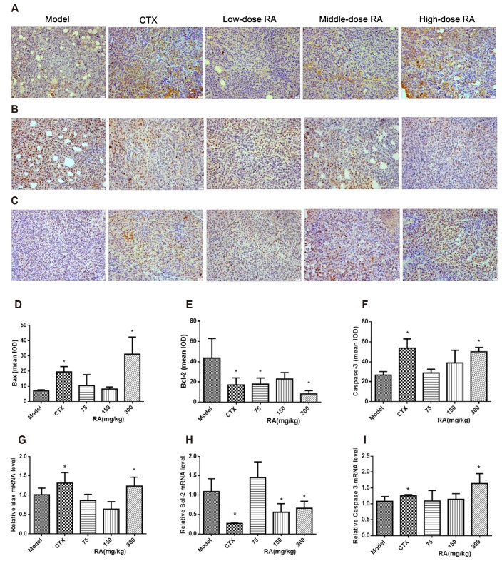 Effects of rosmarinic acid (RA) on expressions of Bax , Bcl-2 , and Caspase-3 in xenograft tumor tissues. Expressions of Bax , Bcl-2 , and Caspase-3 proteins were measured by immunohistochemistry (magnification, ×400). The images were analyzed by an Image Pro Plus 6.0 system. Expressions of Bax , Bcl-2 , and Caspase-3 mRNA were measured by qRT-PCR. GAPDH was used as a loading control. (A, D) Bax protein expression; (B, E) Bcl-2 protein expression; (C, F) Caspase-3 protein expression. (G) Bax mRNA expression; (H) Bcl-2 mRNA expression; (I) Caspase-3 mRNA expression. Data were presented as mean ± standard deviation. IOD, integrated opticdensity. * p