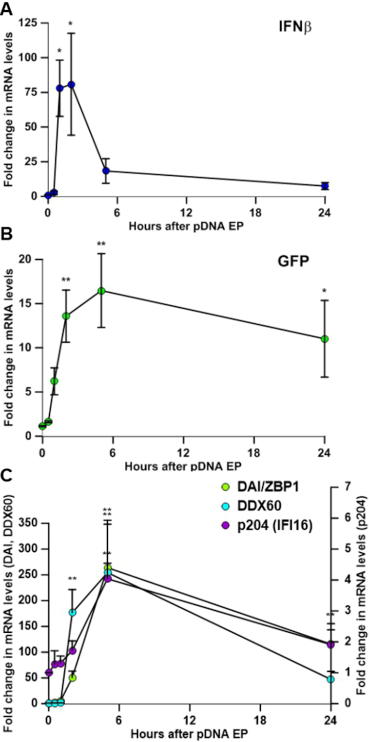 Kinetics of mRNA expression. ( A ) IFN β, ( B ) GFP, ( C ) DAI/ZBP1, DDX60, and p204 mRNA levels at 0, 0.5, 1, 5 and 24 h after transfection ( n = 5–8). * P