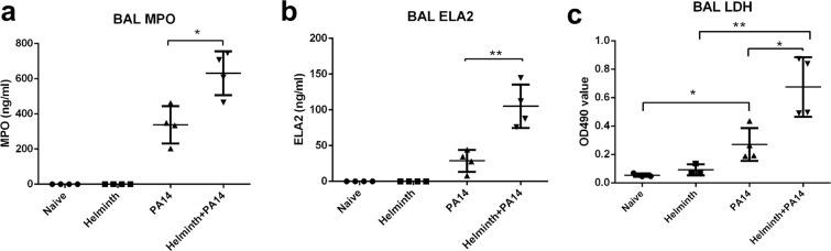 Helminth-induced increase in neutrophil migration during P. aeruginosa infection is correlated with increased MPO and ELA2 levels within the airspace. Protein extracts were prepared from BAL samples and analyzed for ( a ) neutrophil myeloperoxidase (MPO) and ( b ) elastase (ELA2). ( c ) LDH levels were assessed in the cell-free supernatant of the BAL to assess cytotoxicity. Data are shown as mean ± SD and are representative of three independent experiments. * P