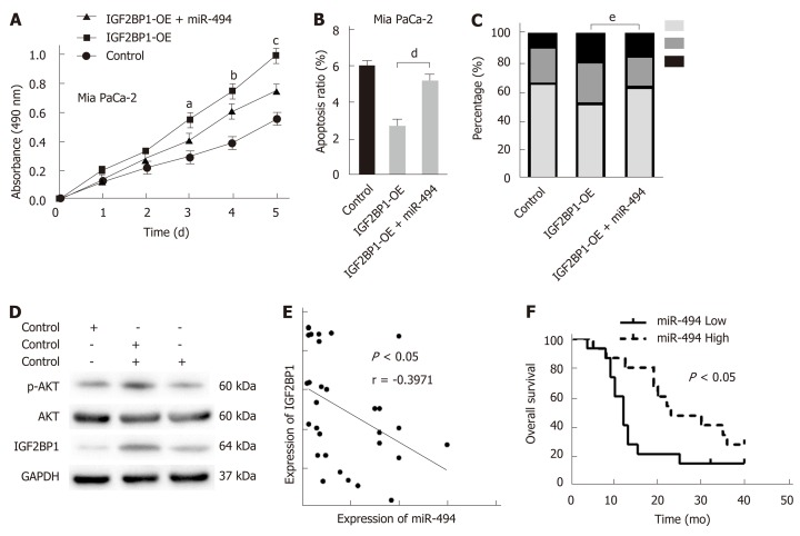 MiR-494 reexpression partly abrogates the oncogenic effect of insulin-like growth factor 2 mRNA-binding protein 1 in pancreatic cancer. A: Enhanced cell viability of Mia PaCa-2 cells due to insulin-like growth factor 2 mRNA-binding protein 1 (IGF2BP1) overexpression was partly reduced following the reexpression of miR-494, which was detected by CCK-8 assays; B: Cell apoptosis was analyzed by flow cytometry when IGF2BP1-overexpressing Mia PaCa-2 cells were cotransfected with miR-494 mimics or their corresponding controls; C: The cell cycle was analyzed by flow cytometry when IGF2BP1-overexpressing Mia PaCa-2 cells were co-transfected with miR-494 mimics or control; D: Western blot analysis of AKT and p-AKT (Ser473) expression in the indicated cells and their corresponding control group; E: Correlations between the expression of miR-494 and IGF2BP1 in 30 pancreatic cancer specimens were determined by Pearson's correlation analysis; F: Kaplan-Meier analysis indicated that low miR-494 expression predicts a poorer overall survival rate than high miR-494 expression. All data are expressed as the mean ± standard deviation from three independent experiments at least and P