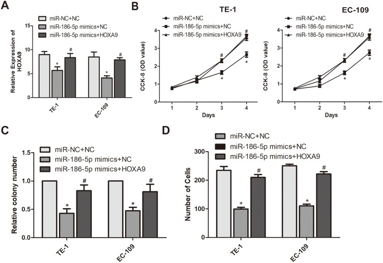 miR-186-5p regulates the mechanism of action of HOXA9 to inhibit the development of esophageal cancer. ( A ) HOXA9 expression levels in eR esophageal cancer TE-1 and EC-109 cell lines co-transfected with miR-186-5p and HOXA9 were detected by qRT-PCR; ( B ) The CCK-8 assay detects the effect of co-transfection of miR-186-5p and HOXA9 overexpression vectors on proliferation of esophageal cancer cells in TE-1 and EC-109 cell lines; ( C ) Plate cloning experiments were performed to detect the number of esophageal cancer proliferation-positive cells after co-transfection of miR-186-5p and HOXA9 overexpression vectors in TE-1 and EC-109 cell lines; ( D ) Transwell assay was used to detect the effect of co-transfection of miR-186-5p and HOXA9 overexpression vectors on the migration ability of esophageal cancer cells in TE-1 and EC-109 cell lines. Data are mean ± SD, * P