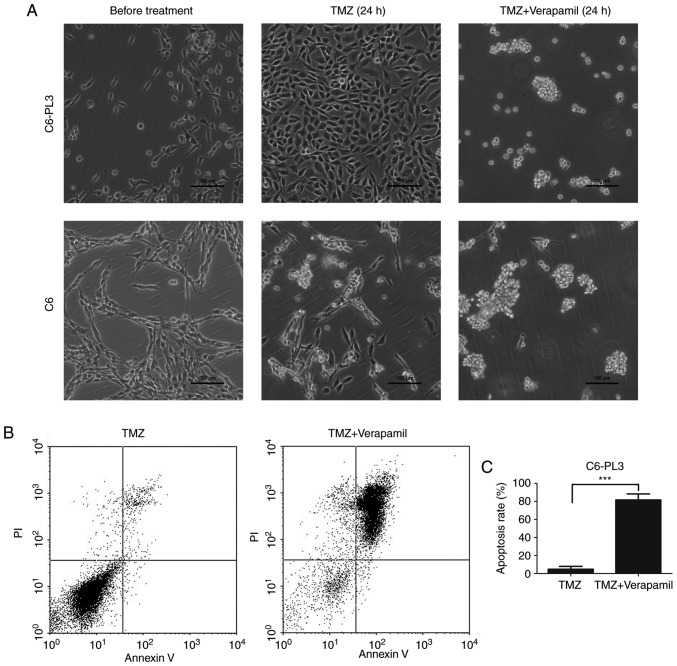 Verapamil increases TMZ-induced tumor sphere formation and apoptosis in TMZ-resistant rat glioma (C6-PL3) and parental rat glioma (C6) cells. (A) Tumor sphere formation in C6-PL3 and C6 cells was observed using phase-contrast microscopy after TMZ and verapamil treatment. (B and C) After treatment, apoptosis was detected using flow cytometry. The average apoptosis rate of TMZ treatment was 4.79%, while after adding the verapamil, the average apoptosis rate was 81.61%. ***P