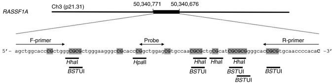 Schematic of the primers and probe used for RE-dMSP of the RASSF1A promoter. The location of the primers and probe, and the recognition sites of three methylation-sensitive restriction enzymes ( Hpa II, <t>Hha</t> I and <t>Bst</t> UI) are presented. RE-dMSP, PCR with methylation-specific restriction enzymes; RASSF1A, Ras association domain-containing protein 1.