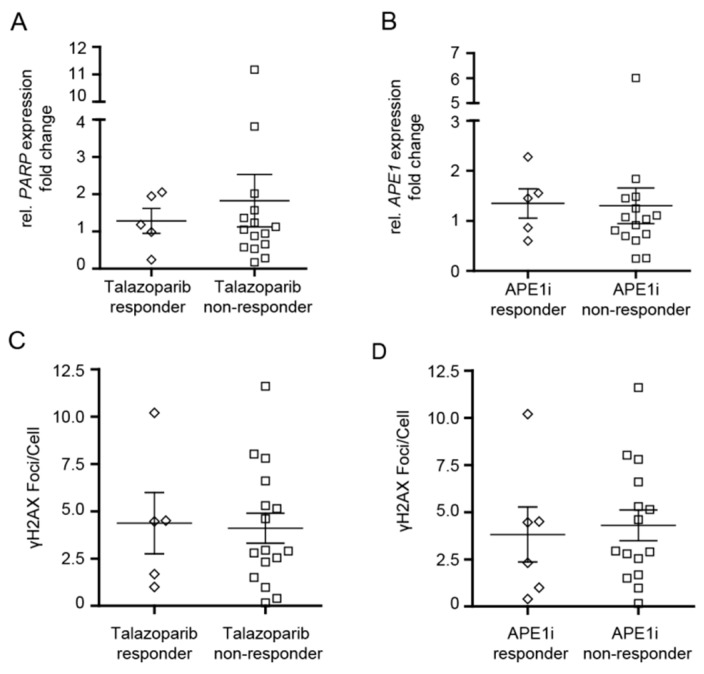 Cytotoxic efficacy of talazoparib and APE1 inhibitor III in CD34+ myelodysplastic syndrome (MDS)/chronic myelomonocytic leukemia (CMML) cells and in CD34+ or CD34− acute myeloid leukemia (AML) cells in relation to PARP1 / APE1 mRNA expression and γ H2AX foci levels. ( A , B ) PARP1 and APE1 mRNA expression levels in 'responders' and 'non-responders'. ( C , D ) Levels of γH2AX foci in 'responders' and 'non-responders'. Error bars represent mean ± standard error of mean.