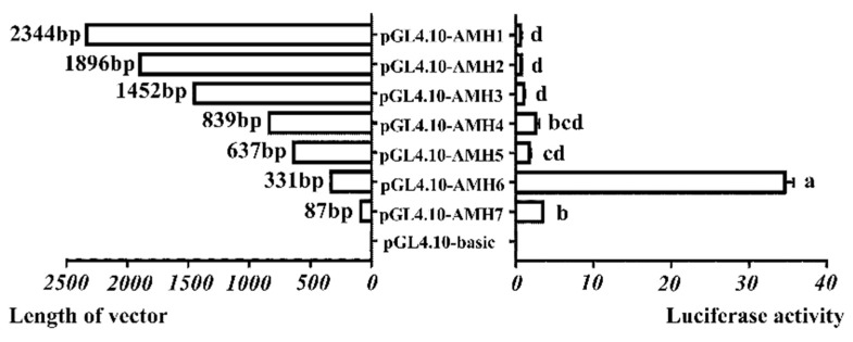 Analysis of AMH gene promoter activity in geese. Luciferase report vectors containing various lengths of the goose AMH promoter region were constructed and transfected into Chinese hamster ovary (CHO) cells. Various lengths of goose AMH region contained pGL4.10-AMH1, deletion of −2344 to −1 bp; pGL4.10-AMH2, deletion of −1896 to −1 bp; pGL4.10-AMH3, deletion of −1452 to −1 bp; pGL4.10-AMH4, deletion of −839 to −1 bp; pGL4.10-AMH5, deletion of −637 to −1 bp; pGL4.10-AMH6, deletion of −331 to −1 bp and pGL4.10-AMH7, deletion of −87 to −1 bp. The left bars indicated truncated AMH promoter sequences linked to luciferase, the bars on the right indicated luciferase activity relative to the pGL4.10-basic negative control vector. Each column represented the mean ± SD ( n = 3). Different lowercase letters represented the evident difference ( p