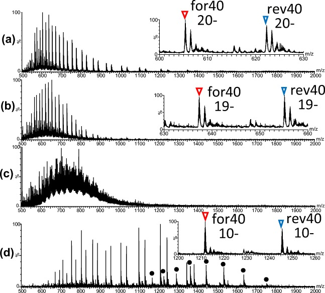 Nano-ESI mass spectra of unmethylated <t>DNA.</t> ( a ) Nano-ESI mass spectrum of the mixture of for40 and rev40. ( b ) Nano-ESI mass spectrum of 40 bp DNA prepared by protocol II: ethanol precipitation in the presence of 7 M ammonium acetate, solubilization with MilliQ water, and desalt with a P-6 spin column equilibrated with MilliQ water. The desalted sample was mixed with 2 M TEA in acetonitrile at a ratio of 1:1. ( c ) Nano-ESI mass spectrum of the <t>Mse</t> I digest of 147 bp DNA prepared by protocol II. ( d ) Nano-ESI mass spectrum of 40 bp DNA prepared by protocol III: ethanol precipitation in the presence of 7 M ammonium acetate, solubilization with 50 mM ammonium acetate, and desalt with a P-6 spin column equilibrated with 20 mM ammonium acetate. The desalted sample was mixed with methanol at a ratio of 1:1. Insets in ( a ), ( b ), and ( d ) indicate expanded mass spectra, showing the most intense peaks. Red and blue reversed triangles correspond to for40 and rev40, respectively. Black closed circles in (d) indicate peaks of double-stranded 40 bp DNA