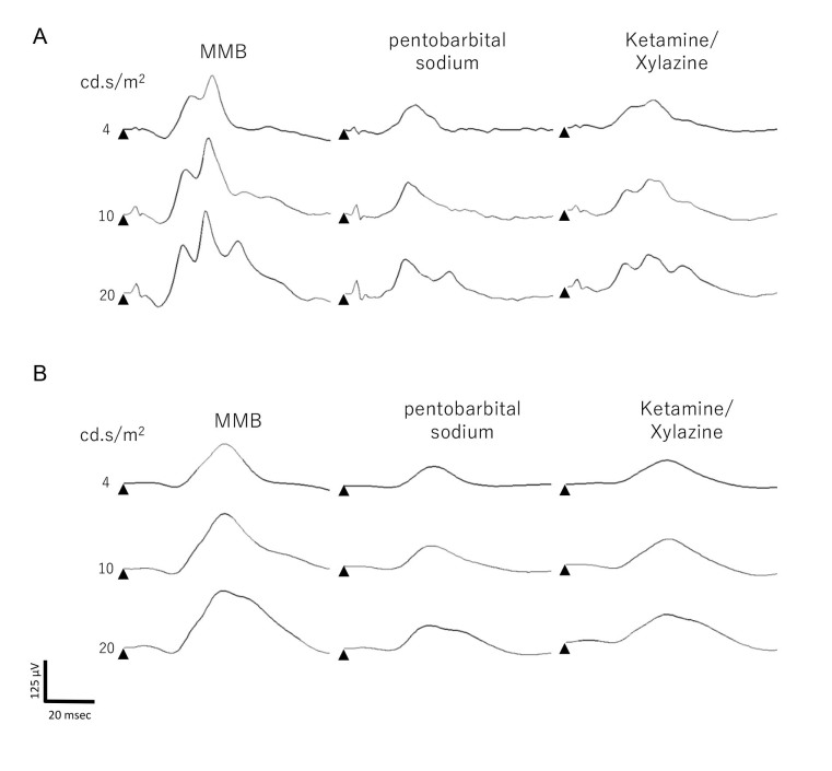 Light-adapted ERGs. A : Representative light-adapted electroretinogram (ERG) recordings performed with midazolam, medetomidine, and butorphanol tartrate (MMB), pentobarbital sodium, and ketamine/xylazine (KX) against a white background. B : The waveforms processed with a 30 Hz low-pass filter for b-wave fitting.