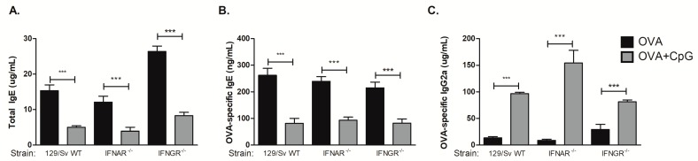 CpG-induced inhibition of IgE and augmented IgG2a production is independent of type I or type II interferon receptors. 129 WT strain or mice lacking type I interferon receptor (IFNAR −/− ) or type II interferon receptor (IFNGR −/− ) on 129 background were submitted to the same protocol of OVA sensitization with alum and i.n. OVA challenge. Experiments were performed on day 22. Serum levels of (A) total IgE, (B) OVA-specific IgE or (C) OVA-specific IgG2c were measured by ELISA. OVA groups ( n = 5) and OVA+CpG groups ( n = 5). Values represent the mean ± SD and are representative of two independent experiments. One-way ANOVA: *** p