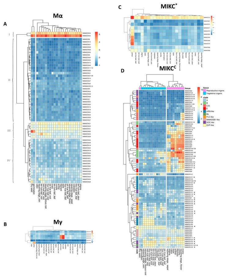Expression profiles of 168 NtMADS-box genes in tissues at different developmental stages. The relative transcript abundances of 168 NtMADS-box were examined via microarray and visualized as a heatmap. The expression profiles of NtMADS-box genes in the 23 different samples, including dry seeds, germination seeds, cotyledons, leaves from two-true leaf stage (labeled as two true leaf_leaf), roots from two-true leaf stage (two true leaf_root), leaves from four-true leaf stage (four true leaf_leaf), roots from four-true leaf stage (four true leaf_root), leaves from six-true leaf stage (six true leaf_leaf), roots from six-true leaf stage (six true leaf_root), leaves from ten-true leaf stage (ten ture leaf_leaf), roots from ten-true leaf stage (ten ture leaf_root), and squaring stage (sepal, fibrous root, and flower), vein, ovary, filament, style, corolla, calyx, stigma, and anther. The X axis is the samples in tissues at different developmental stages. The color scale represents Log2 expression values. The symbol of the star in the MIKC C subfamily represents selected genes for confirming the gene expression by qPCR. Three independent biological experiments with four individual plants were collected for RNA extraction.