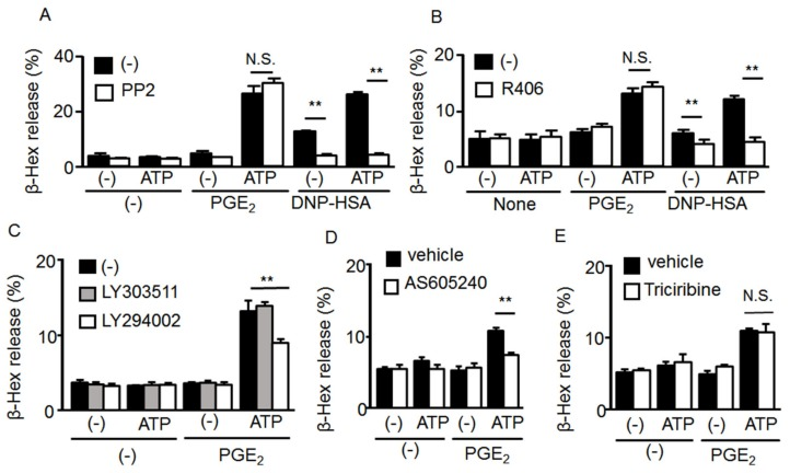 Effect of tyrosine kinase and phosphoinositide 3-kinase (PI3K)/Akt signaling pathway inhibitors on mast cell (MC) degranulation induced by co-stimulation with ATP and prostaglandin (PG)E 2 . ( A ) Bone marrow-derived MCs (BMMCs) were preincubated with a vehicle or the Src tyrosine kinase inhibitor PP2 (1 μM) for 5 min and then stimulated with ATP (100 μM) with or without PGE 2 (1 μM) or 2,4-dinitrophenyl human serum albumin (DNP-HSA, 10 ng/mL). ( B ) BMMCs were preincubated with a vehicle or the Syk inhibitor R406 (2 μM) for 5 min and then stimulated with ATP (100 μM) with or without PGE 2 (1 μM) ( n = 3). ( C ) BMMCs were preincubated with a vehicle, the PI3K inhibitor LY294002 (10 μM), or the control compound LY303511 (10 μM) for 5 min and then stimulated with ATP (0.1 mM) with or without PGE 2 (1 μM) ( n = 3). ( D ) BMMCs were preincubated with a vehicle or the PI3Kγ inhibitor AS605240 (1 μM) for 5 min and then stimulated with ATP (100 μM) with or without PGE 2 (1 μM) ( n = 3). ( E ) BMMCs were preincubated with a vehicle or the Akt inhibitor triciribin (10 μM) for 5 min, and then stimulated with ATP (100 μM) with or without PGE 2 (1 μM) ( n = 3). Data are shown as the mean ± SEM. N.S. no significant difference, ** p