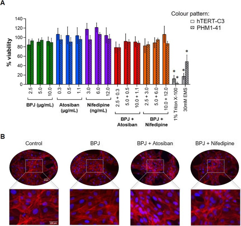 Effect of BPJ, atosiban, nifedipine, BPJ plus atosiban and BPJ plus nifedipine on myometrium cell viability. ( a ) Cell viability assays were performed in the presence of BPJ (2.5–10.0 μg/mL), atosiban (0.3–1.1 μg/mL) and nifedipine (3.0–12.0 ng/mL), as well as of BPJ plus atosiban and BPJ plus nifedipine (same concentrations as with single treatments) using hTERT-C3 and PHM1–41 human myometrium cell lines. Cells were incubated with the test substances for 24 h. Triton X-100 (1%) and ethyl methanesulfonate (30 mM) were used as positive controls. Data is presented as mean ± SEM of 4 independent experiments ( n = 4), each carried out in quadruplicate; * p