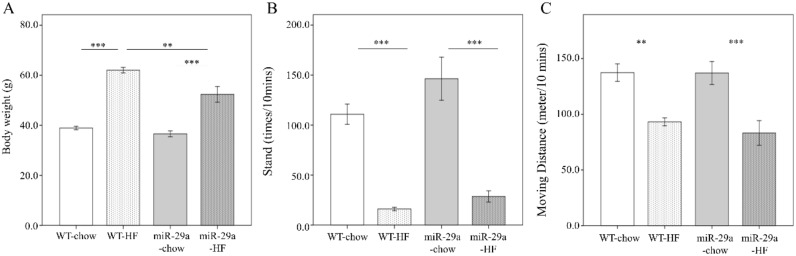 Overexpression of <t>miR-29a</t> reduces weight gain, but has no effect on physical activity in the context of chronic high fat diet (HFD). Weight gain and physical activity of wild type and miR-29aTg mice fed a chow or high-fat diet for 12 months were measured, including ( A ) body weight, ( B ) frequency rearing stand, and ( C ) moving distance documented using a 30 × 30 cm open field box in ten minutes. Data calculated from five to ten mice per group are expressed as mean ± SE. ** p