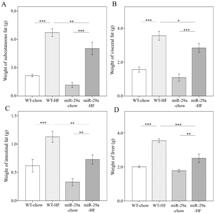 Overexpression of miR-29a significantly reduces fat accumulation in adipose tissue and liver weight in the context of chronic HFD. Various tissue parts were dissected and weighed immediately after sacrifice, with weight of ( A ) subcutaneous, ( B ) visceral, ( C ) intestinal fat tissue, and ( D ) liver. Data calculated from seven to ten mice per group are expressed as mean ± SE. ** p