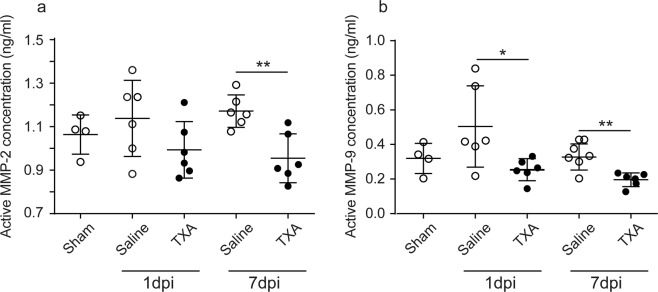 TXA reduces activation of MMP-2 and <t>MMP-9</t> in the injured spinal cord. Contusion SCI was induced by the Infinite Horizons impactor in C57BL/6 mice treated without or with TXA. Mice were treated with a bolus intravenous injection of TXA just after SCI followed by per os administration of TXA (20 mg/mL of drinking water). The concentrations of active MMP-2 ( a ) and MMP-9 ( b ) in the spinal cord were assessed at day 0 (laminectomised mice without SCI; Sham), day 1 (1 dpi), or day 7 (7 dpi). Values and error bars represent mean ± SD ( n = 6 in each group). * P