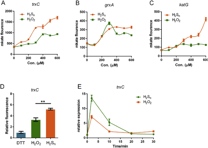 Comparison of the activation effect of H 2 S n and H 2 O 2 . A-C H 2 S n or H 2 O 2 (100–600 μM) was used to treat E. coli wt strains containing reporter plasmids. (n ≥ 3 for each group) D Purified OxyR and its mutants were treated with DTT to ensure their thiols were in the reduce form; The proteins were then treated with H 2 S n or H 2 O 2 to generate H 2 S n - or H 2 O 2 -modified OxyR. The in vitro transcription-translation system contained P trxC -mKate DNA fragment (200 ng) and DTT-reduced, H 2 S n - or H 2 O 2 -treated OxyR (500 ng) and the expressed mKate was analyzed with the fluorescence photometer Synergy H1. (n ≥ 3 for each group) E H 2 S n or H 2 O 2 (400 μM) was used to treat E. coli wt. RT-qPCR was used to quantify the expression of trxC . (n ≥ 3 for each group).
