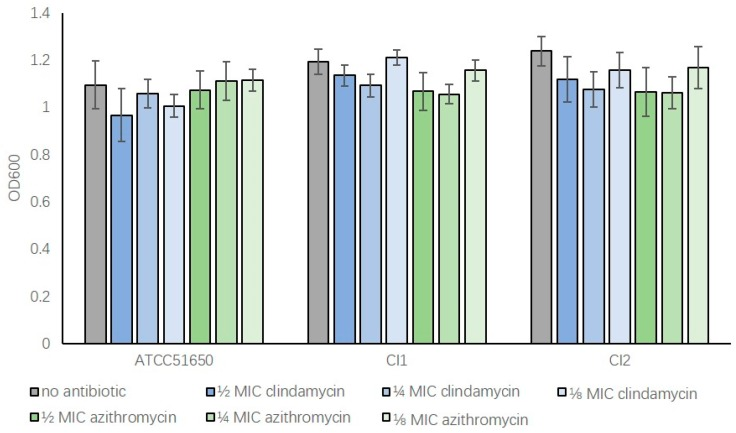 Sub-inhibitory concentrations of clindamycin and azithromycin do not significantly affect bacterial growth following 24 h incubation. The OD600 absorbance values of S. aureus after 24 h culture. <t>ATCC51650,</t> CI1, CI2 were grown without (no antibiotic, grey) or with ½, ¼, ⅛ MIC clindamycin (blue) or azithromycin (green) ( p > 0.05). n = 3, bars represent standard error of means.
