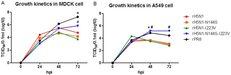 Growth kinetics of recombinant H5N1 viruses in MDCK and A549 cells. Each recombinant virus was diluted to 10 5 50% chicken embryo infection dose (EID 50 )/0.1 mL, and 0.5 mL of diluents were inoculated into confluent ( a ) MDCK and ( b ) A549 cells in <t>6-well</t> plates for 1 h. After 1 h, the inoculated virus was removed, and 1 mL of fresh medium was added. During 72 h of incubation, the supernatant was harvested at 0, 24, 48, and 72 hpi, and 50% tissue culture infectious dose (TCID 50 )/0.1 mL of each time point was measured in MDCK cells. The TCID 50 /0.1 mL values are the average of three independent experiments. #, *, significant differences of rH5N1-N144S-I223V (#) and rPR8 (*) in comparison with other viruses ( p