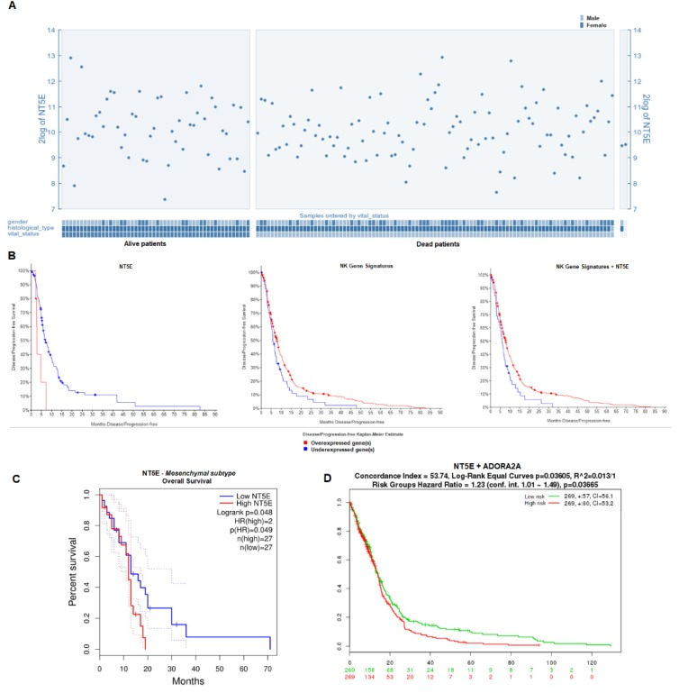 Survival analysis in the context of NT5E and natural killer (NK) gene signature expression. ( A ) Expression of NT5E in GBM patient samples plotted on the basis of patient vital status. Analysis was done in R2 ( n = 540). ( B ) Disease-free survival of GBM patients on the basis of NT5E expression level from TCGA RNASeq V2 RSEM data ( p = 0.0039; z = 2; left ; n = 166); NK gene signatures comprising 13 NK-specific genes from U133 Affymetrix gene expression data ( p = 0.0285; middle panel ); and both NT5E and NK gene signatures from U133 Affymetrix gene expression data ( p = 0.0109; right ). Kaplan–Meier plots were generated in cBioPortal ( n = 533). ( C ) Overall survival of GBM patients with the mesenchymal subtype based on NT5E expression. Analysis was done in GEPIA2 ( n = 163). ( D ) Overall survival stratified by risk group for patients expressing NT5E and ADORA2A . Analysis was done in R2.