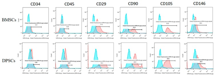 Characterization of surface marker profiles for BMSCs and DPSCs. The flow cytometry results revealed that the BMSCs and DPSCs were positive for CD29, CD90, CD105, and CD146, but negative for CD34 and CD45.