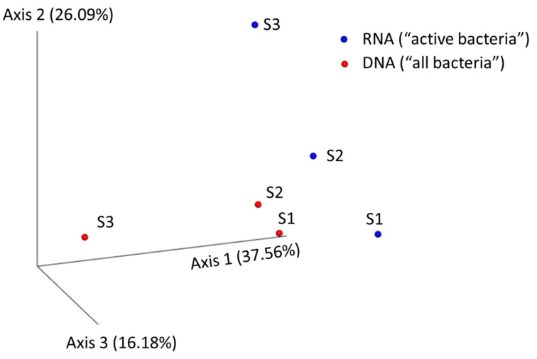 "Principal component analysis (PcoA) of bacterial community structure at the genus level from the analysed RTE salads. The PcoA was performed with ""qiime tool collapse"" at the desired taxa level using the Euclidean metric to calculate the matrix distance. Samples from total bacterial cells (dormant, dead, and active cells containing 16S rDNA genes) and metabolically active bacteria (cells containing ribosomal RNA, 16S rRNA) are depicted in red and blue colors, respectively. Two close samples in the PcoA indicated that they had similar bacterial species composition and relative abundances of taxa. Although no major differences were observed regarding the abundant bacterial species composition, significant differences in relative abundances were observed (see Figure 2 ), especially for those low abundant species."