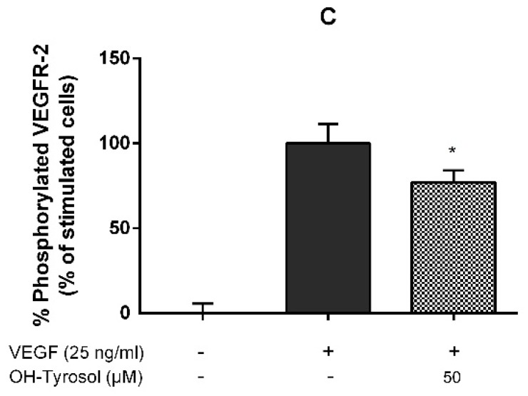 Hydroxytyrosol inhibits vascular endothelial growth factor (VEGF)-induced <t>VEGFR-2</t> phosphorylation by interacting with cell membrane components. Human umbilical vein endothelial cells (HUVECs) were incubated with 50 μM or 1 μM hydroxytyrosol and VEGF (25 ng/mL). ( A ) Hydroxytyrosol and VEGF were mixed 5 min prior to cells treatment for another 5 min; ( B ) hydroxytyrosol was pre-incubated for 4 h with HUVECs and subsequently incubated with VEGF for 5 min; ( C ) hydroxytyrosol was pre-incubated for 4 h with HUVECs and, after removal of the polyphenol (with PBS), was then stimulated with VEGF for 5 min. p-VEGFR-2 (Tyr1175) was quantified by ELISA essay; * p