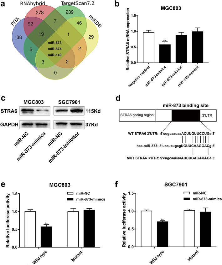 STRA6 is a direct target of miR-873. a Putative binding sites in 3′-UTR of STRA6 for the related miRNA binding. b The mRNA expression of STRA6 after transfecting with miR-873-mimics, miR-874-mimics and miR-149-mimics in MGC803. c The protein level of STRA6 were determined by western blot after transfection. d Wild type (WT) and Mutant type (MUT) STRA6 3′UTR sequences were cloned into pGL3 luciferase reporter vector. e and f miR-873 inhibited the relative luciferase activity in GC cells co-transfecting with miR-873-mimics and pGL3-STRA6-WT. (* p