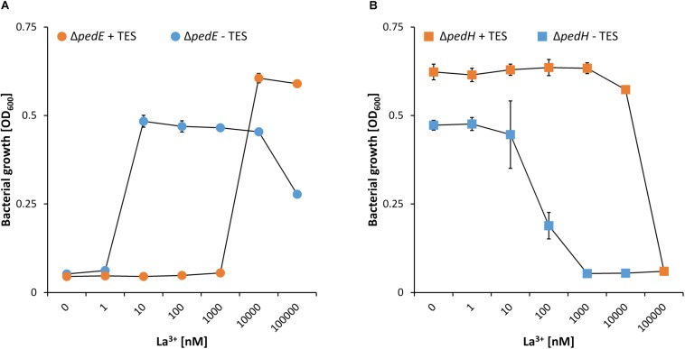 Growth of strain Δ pedE ( A , dots) and Δ pedH ( B , squares) in 1 mL liquid M9 medium in 96-well deep-well plates on 5 mM 2-phenylethanol and various concentrations of La 3+ in the presence (orange) or absence (blue) of trace element solution (TES). OD 600 was determined upon 48 h of incubation at 30°C and 350 rpm. Data are presented as the mean values of biological triplicates and error bars represent the corresponding standard deviations.
