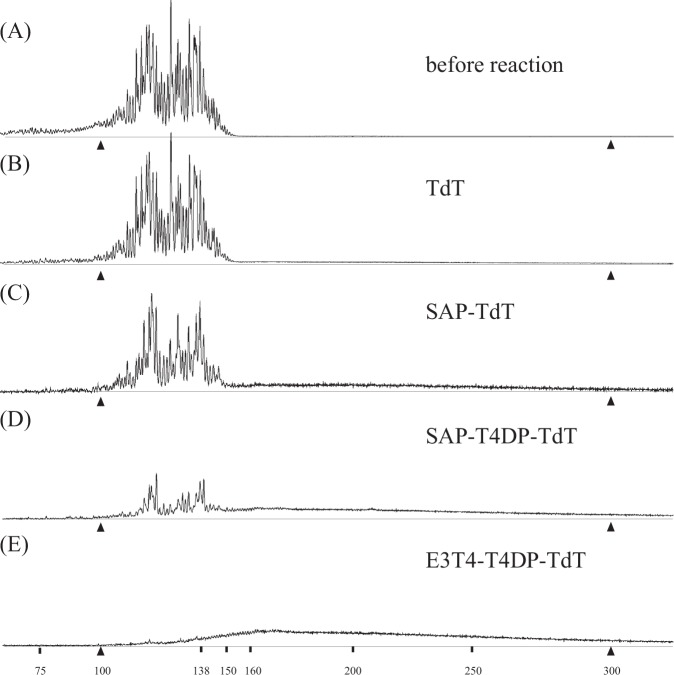 Terminal deoxynucleotidyl transferase (TdT) treatment of samples pretreated with different enzymes. H4 DNA mixture containing 25 fmol of FAM-labeled DNA was subjected to different enzymatic treatments, followed by TdT treatment. The panels show the samples before treatment ( a , identical to that shown in Fig. 1a ); samples treated with TdT alone ( b ); samples treated with SAP followed by TdT ( c ); samples treated serially with SAP, T4DP, and TdT ( d ); samples treated serially with a combination of exonuclease III and T4DP, T4DP alone, and TdT ( e ). Between the two enzymatic treatments, the samples were purified using the DNA clean-up column. Following the TdT treatment, the samples were purified using a DNA clean-up column before mixing with HiDi-LIZ500. All data were y-axis scaled so that sums of FAM peak areas are apparently even across the panels. Two calibrator peaks from the LIZ size standard (100 and 300 nucleotides) are indicated by filled triangles, and relevant size marker locations are also indicated
