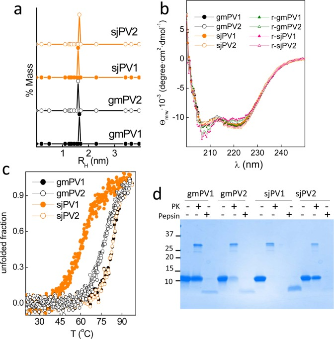 Conformational properties of the Ca 2+ -bound globular folds of the distinct β-PV isoforms. ( a ) DLS analysis of the association state and hydrodynamic features. ( b ) Secondary structure probed by far-UV CD spectra. Spectra were recorded before (circles) and after heating (triangles) at 95 °C. ( c ) Thermal denaturation monitored changes in θ 222 as a function of temperature. Symbol key: •, gmPV1; ◦, gmPV2; , sjPV1; , sjPV2. ( d ) SDS-PAGE analysis of proteinase K and pepsin digestion products of β-PV isoforms. Digestions were performed using a 1/50 protease/β-PV ratio. The full-length gel is displayed in supplementary Fig. 4S .