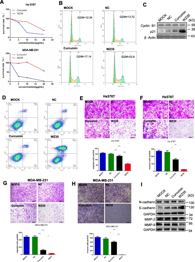 WZ35 inhibits breast cancer cells proliferation, migration, invasion and induced apoptotic cell death and cell cycle arrest. a The effects of WZ35 and curcumin on the proliferation of breast cancer cells. b Induction of cycle arrest in MDA-MB-231 cells was detected by Flow cytometry after treatment with curcumin (10 μg/mL) and WZ35 (10 μg/mL) for 24 h. WZ53 increased the proportion of cells in the G2/M phase. c Expression of cell cycle relative proteins Cyclin B1, and p21 were determined by western blot after treatment with WZ35 (10 μg/mL) or curcumin (10 μg/mL) for 24 h. GAPDH was used as internal control. d Induction of apoptosis in MDA-MB-231 cells was determined by flow cytometry after treatment with WZ35 (10 μg/mL) and curcumin (10 μg/mL) for 24 h. Similar results were obtained in three independent experiments. e , h Transwell assay was performed to evaluate the effects of WZ35 and curcumin on Hs578T ( e , f ) and MDA-MB-231 ( g , h ) cells migration and invasion. Cell migration and invasion images were presented and migrated cells were quantified. i EMT biomakers N-cadherin, E-cadherin, MMP-2 and MMP-9 were determined by western blot. Data are presented as mean ± SD, * p