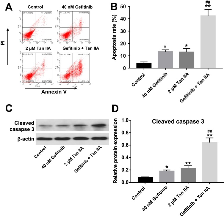 Tan IIA enhances the pro-apoptotic effect of gefitinib in HCC827/gefitinib cells. ( A, B ) HCC827/gefitinib cells were treated with 40 nM OXA or/and 2 μM Tan IIA for 72 hrs. Apoptotic cells were measured by flow cytometry. ( C, D ) Expression level of active caspase 3 in HCC827/gefitinib cells was detected with Western blotting. *P