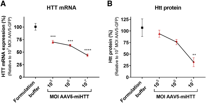 <t>HTT</t> <t>mRNA</t> and Mutant Htt Protein Lowering in HD71 Patient iPSC-Derived Neuronal Culture (A) HTT mRNA levels relative to the mean expression in control-treated cells (AAV5-GFP at a MOI of 10 7 ) were determined by gene-specific TaqMan qPCR. (B) Ultra-sensitive single molecule counting assay with 2B7 and MAB2166 antibodies to quantify human Htt protein (both wild-type and mutant), relative to AAV5-GFP at a MOI of 10 7 . Data were evaluated using a one-way ANOVA and corrected using a Bonferonni test. **p