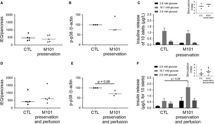 Rat islet quality was improved with M101 use for pancreas preservation when injected in the organ. M101 was added in the preservation solution (A, B, C, D, E, F) and injected in the pancreas (D, E, F). A, D, Islets were counted using Islets Equivalents (IEQ) just after isolation (n = 5). B, E, p38 activation (phosphorylated <t>protein/β‐actin</t> ratio) was analysed by Western blot in islets (n = 3). C, F, Amount of insulin secreted by islets under glucose stimulation was quantified by ELISA (n = 5). ** P
