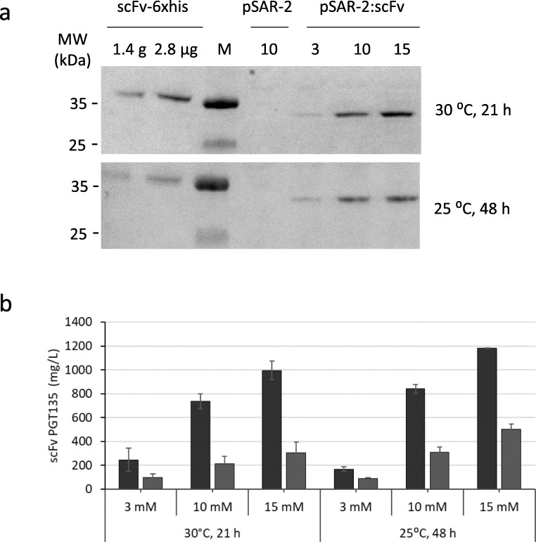 Expression of antibody fragment PGT135 scFv. PGT135 scFv is expressed by E. coli BL21 from the pSAR-2:scFv vector with different concentrations of rhamnose for induction, and at two different temperatures (30 °C and 25 °C) and harvest times (21 h and 48 h). a Representative western blot with Protein L–HRP conjugate binding to PGT135 scFv antibody fragments in the soluble protein fraction. Numbers 3, 10, and 15 indicate the amount of rhamnose added for induction in mM. E. coli BL21 pSAR-2 empty induced with 10 mM of rhamnose is included as a negative control. Two different known concentrations of the commercially available His 6 -tagged antibody PGT135 scFv-6xHis are included for quantification. b Graph showing semi-quantitative data for PGT135 scFv production in shaker flasks as determined by western blot based on two biological replicates. Black bars show PGT135 scFv in total cell fraction and gray bars in soluble protein fraction. Error bars indicate standard deviation of two biological duplicates